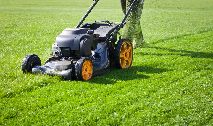 5 Questions to Ask Your Lawn Care Company