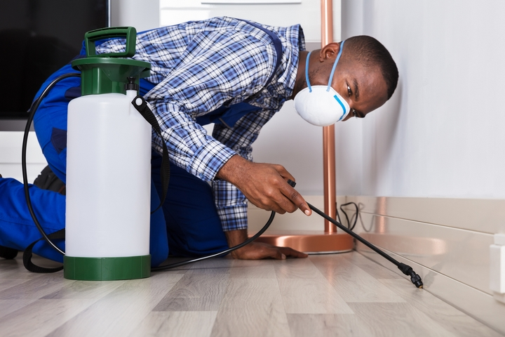 5 Signs You Need to Hire Pest Control