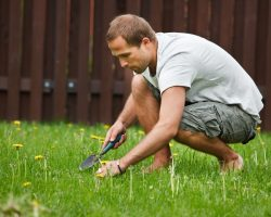 4 Proven Methods of Weed Control