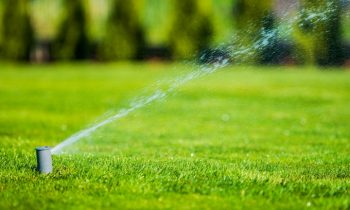 6 Key Steps to Prepare Your Lawn for Fall and Winter