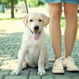 5 Best Tips for Raising Golden Retrievers