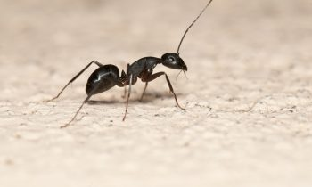 8 Tips on How to Get Rid of Ants in the Bathroom Sink