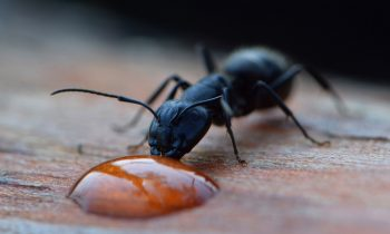 7 Best Tips on How to Get Rid of Ants in the Kitchen