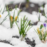 5 Winter Landscaping Tips to Prepare Your Lawn in Spring